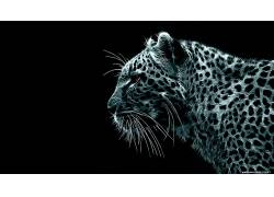 豹,黑色的背景,Fractalius,动物,数字艺术,简单的背景,豹(动物)图片