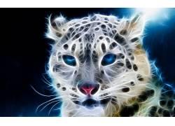 豹(动物)260485图片