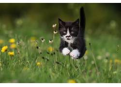 动物,猫,跳跃,草,赛跑227327图片