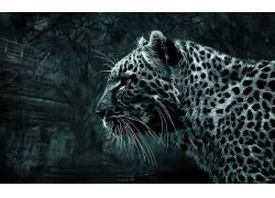 动物,简单的背景,豹(动物)211288图片