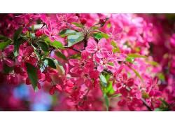 红色的花,花朵壁纸,花