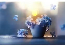 杯子,植物,蓝色,花卉548261
