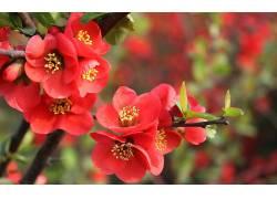 花卉,红色的花朵,壁纸189720