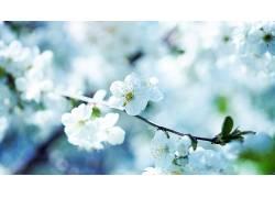 花卉,特写,摄影,白色的花朵,壁纸,景深595119