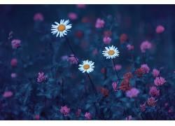 安德烈梅特科夫,蓝色,白色的花朵,壁纸,植物,500px的587539