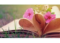 花卉,摄影,图书276886