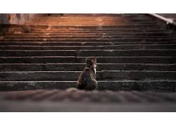 猫,动物,楼梯,景深,脚步337954