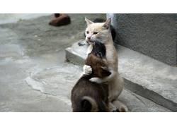 猫,狗,拥抱,动物,小狗62040图片
