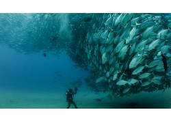 海,鱼,摄影,动物,水肺潜水,性质178504图片