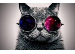 猫,眼镜,空间,抽象,极简主义,动物,数字艺术,选择性着色,简单的背