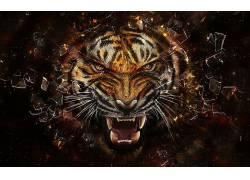 虎,抽象,动物,数字艺术,破灭62434