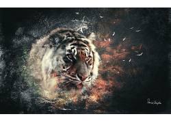虎,数字艺术,抽象,动物2439