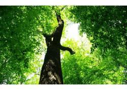 树木,树叶,壁纸,植物,蠕虫的眼睛视图63302