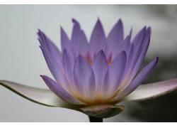 模糊,摄影,壁纸,花卉,紫色的花朵244768