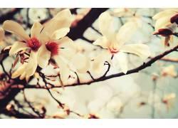 樱花,摄影,花卉,壁纸187152