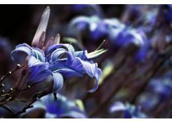 蓝色,壁纸,特写,景深,花卉,蓝色的花朵670669