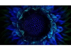 蓝色,花卉,宏,数字艺术,植物,蓝色的花朵103660