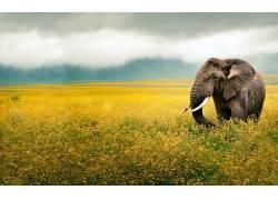 象,花卉,黄色,云,摄影359521