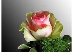 101744,地球,玫瑰,花,壁纸图片