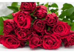 102407,地球,玫瑰,花,壁纸图片