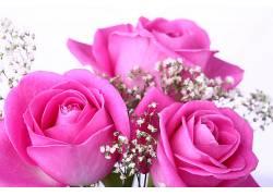 102509,地球,玫瑰,花,壁纸图片
