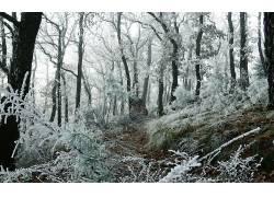 117391,地球,冬天的,壁纸图片