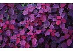 红色叶子壁纸图片