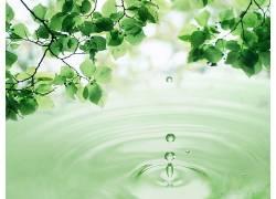 绿叶水滴背景图片