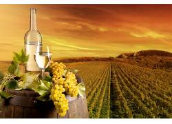 食物,葡萄酒,瓶子,葡萄园,葡萄,仍然,生活,壁纸