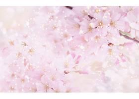 221905,地球,花,花,花,粉红色,花,樱花,壁纸