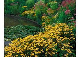 222564,地球,花,花,花园,壁纸