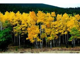160604,地球,秋天,风景,摄影,天空,荒地,树,黄色,富有色彩的,森林