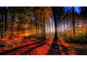 176236,地球,森林,秋天,自然,树,叶子,阳光,壁纸图片