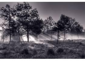 721345,地球,阳光,自然,森林,黑色,白色,壁纸图片