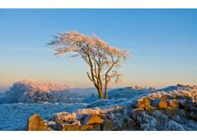248572,地球,树,树,严寒,寒冷,季节,风景,壁纸