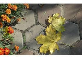 262138,地球,叶子,壁纸