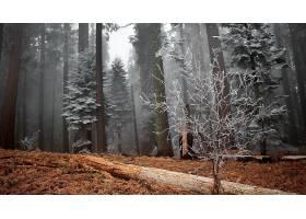 244074,地球,森林,树,严寒,雾,壁纸