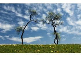 229323,地球,树,树,壁纸