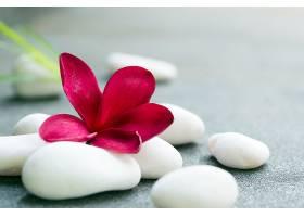 红花与白色石头