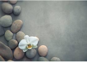 石头背景与白色蝴蝶兰