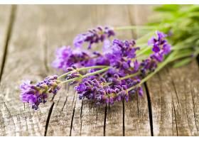 淡紫色的花