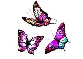 水彩画蝴蝶