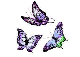 紫色蝴蝶与绿色蝴蝶