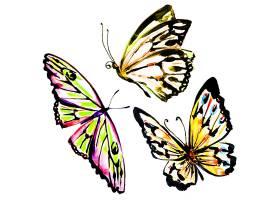 水彩画彩色蝴蝶