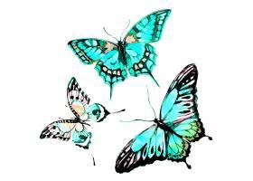 水彩画三只蝴蝶