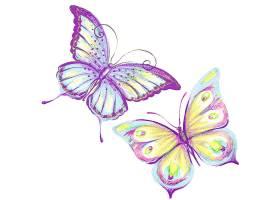 漂亮的彩色蝴蝶