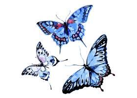 三只漂亮的水彩画蝴蝶