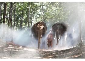 树林浓雾与大象