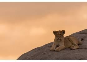 石头上的小狮子