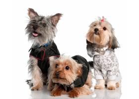 三只宠物狗